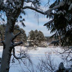Сквозь кружево ветвей (река Медведица, Тетьково, Тверская обл.)