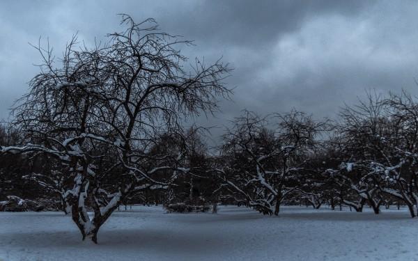 Призраки яблонь (Северное Тушино)
