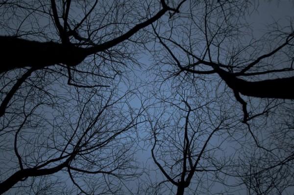 Деревья - руки в облаках (Северное Тушино)