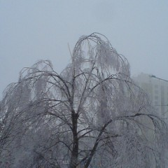 Тяжесть льда на хрупких ветках