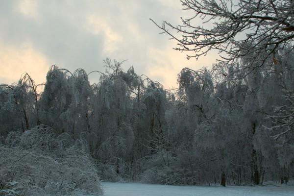 Заколдован невидимкой, дремлет лес под сказку сна...
