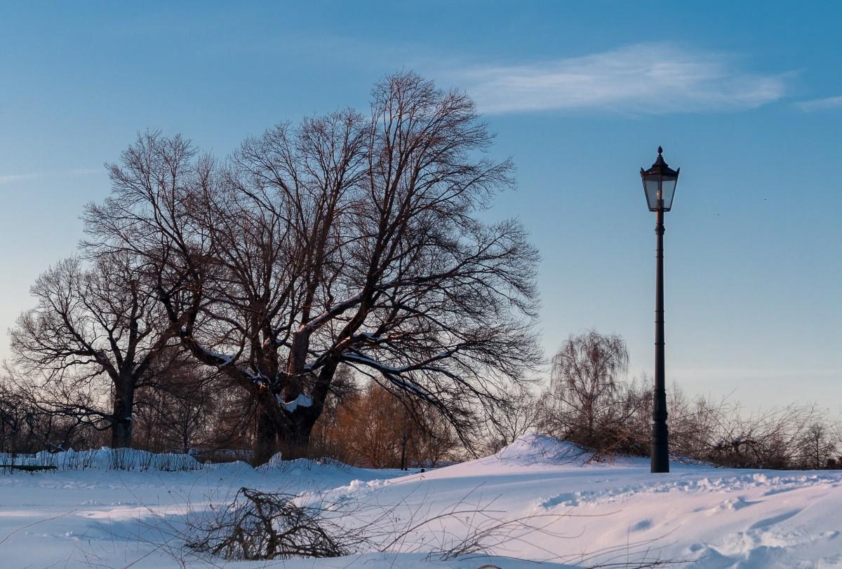 Последний страж зимы