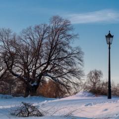 Последний страж зимы. Парк Коломенское