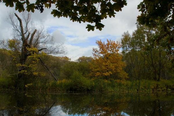 Осень в рамочке