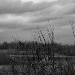 Холодные поля