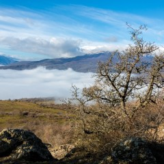 Весенняя синева. Здесь, на южных склонах Крымских гор, начало февраля - уже вполне весна.