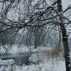 Ветвей подснежные узоры