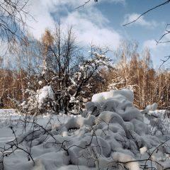 Засыпан снегом спящий лес...