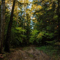 Лес не желает облетать...