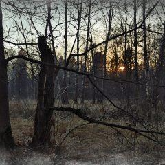 Лес поздней осенью