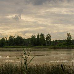 Горенки. Заросшее озеро