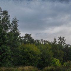 Зеленый лес в дождливом сентябре